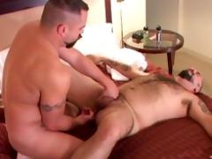bulky bears in a motel room